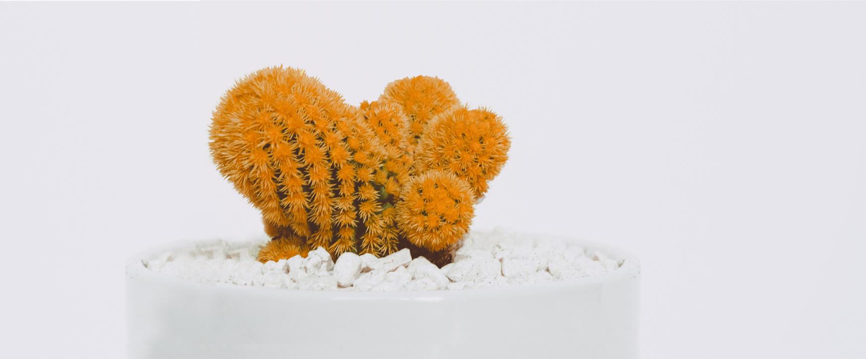 cactus pour la page épilation
